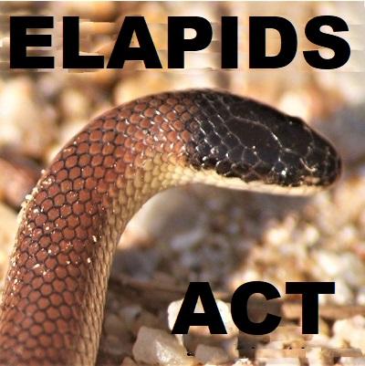 Elapids of ACT