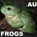 Selection of Australian Frogs