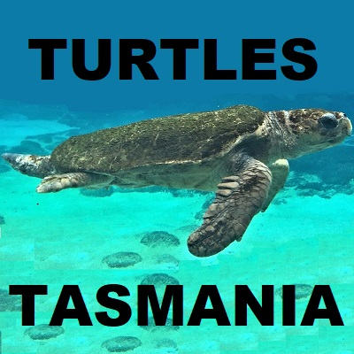 TURTLES Tortoises Chelonii Testudines