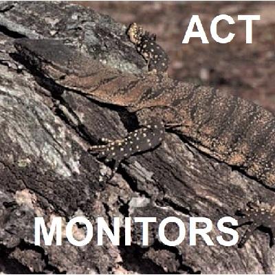 ACT MONITOR LIZARDS Goannas Varanids Varanidae