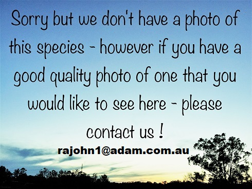 Photo wanted